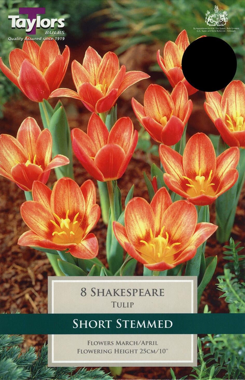 Tulip Shakespeare x8