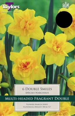 Narcissus Double Smiles x6