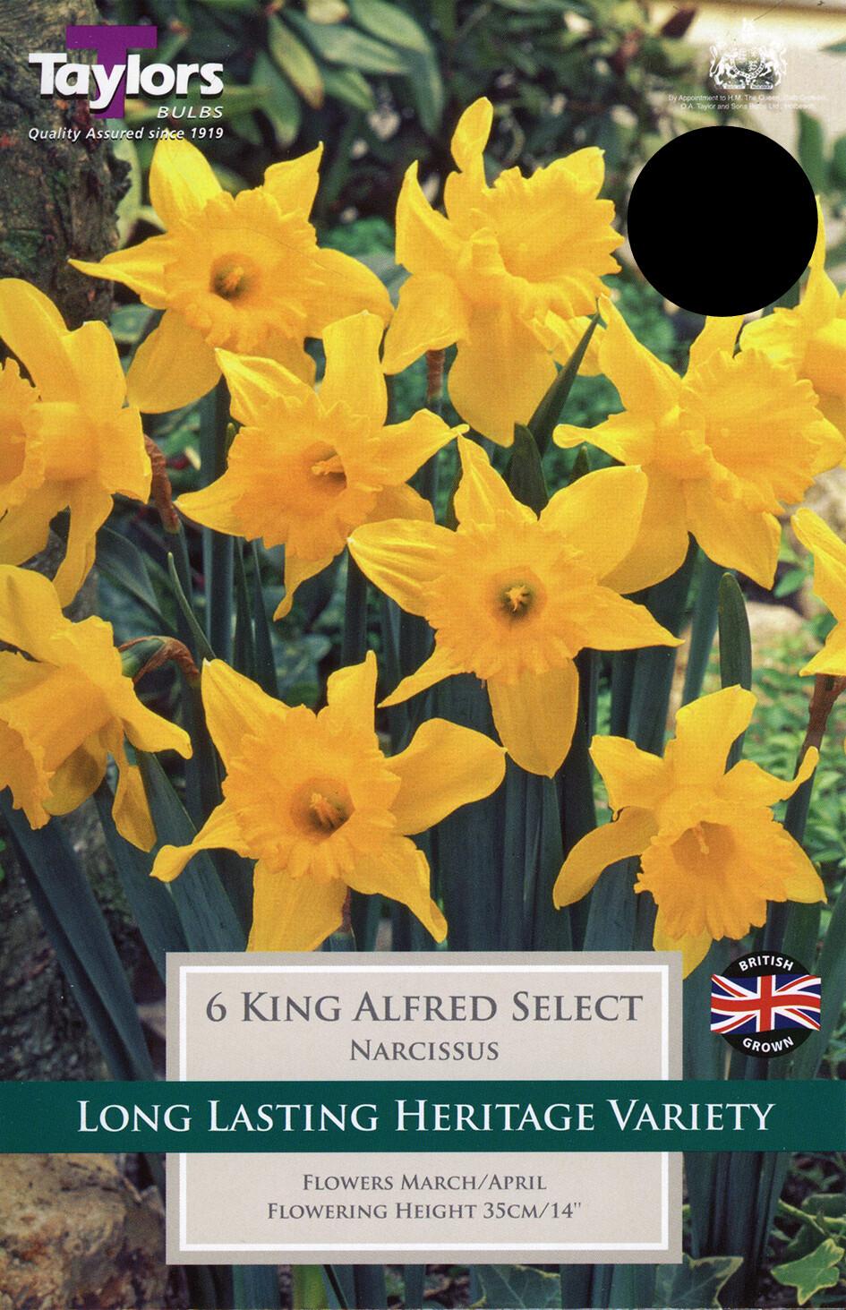 Daffodil King Alfred Select x6