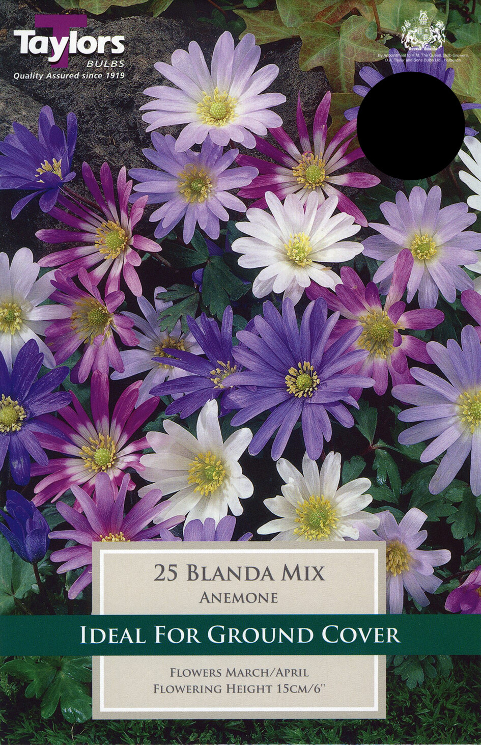 Anemone Blanda Mixed x25
