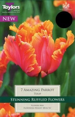 Tulip Amazing Parrot x7