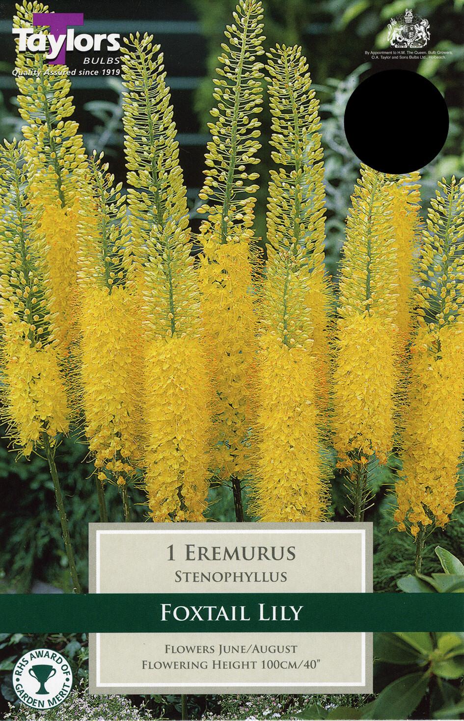 Eremurus Stenophyllus x1