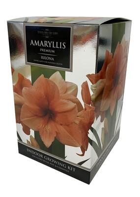 Amaryllis Premium Gift - Rilona