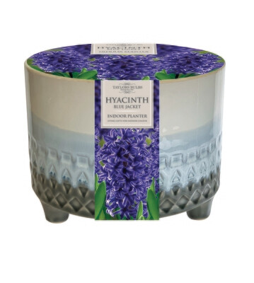 Indoor Hyacinth Planter