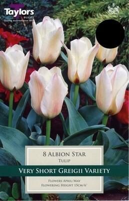 Tulip Albion Star x8