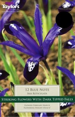 Iris Dwarf Blue Note x12
