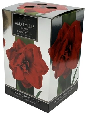 Amaryllis Premium Gift - Cherry Nymph