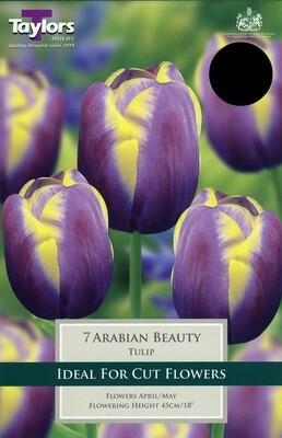 Tulip Arabian Beauty x7