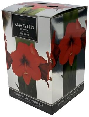 Amaryllis Premium Gift - Red Rival