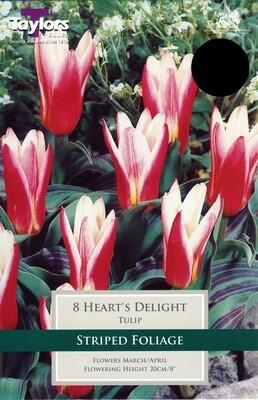 Tulip Heart's Delight x8