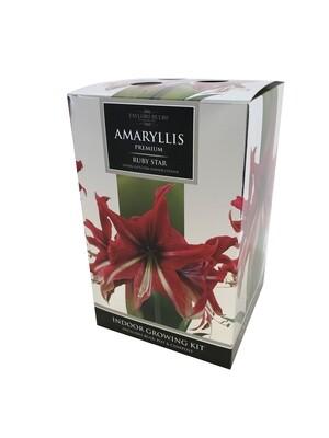 Amaryllis Premium Gift - Ruby Star