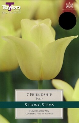 Tulip Friendship x7