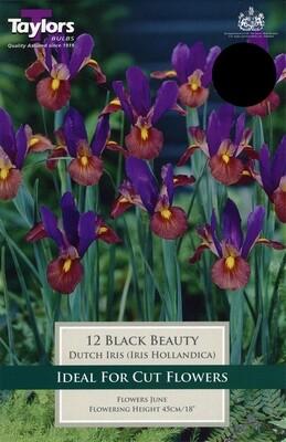 Iris Black Beauty x12