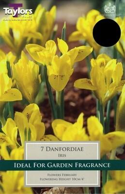 Iris Danfordiae x7