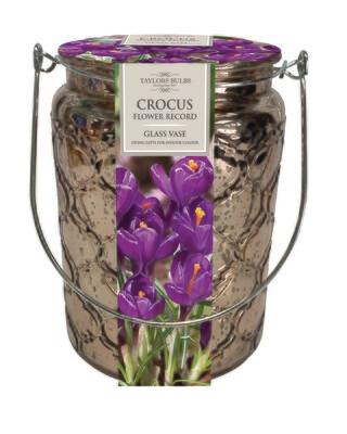 Indoor Crocus Glass Vase