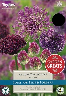 Allium Collection x50