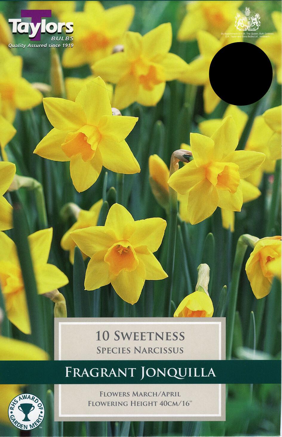 Narcissus Sweetness x10
