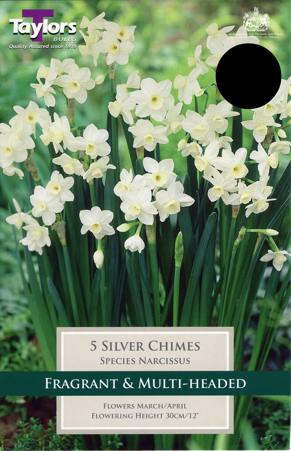Narcissus Silver Chimes x5