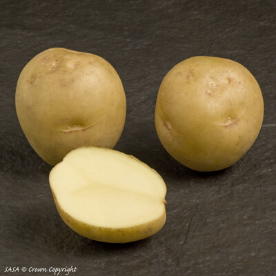 Seed Potato Marfona (per Kg)