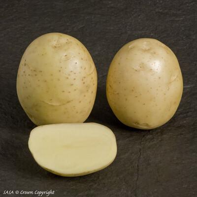 Organic Seed Potato Orla (1kg)