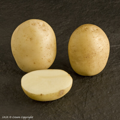 Organic Seed Potato Casablanca (1kg)
