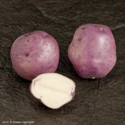 Organic Seed Potato Arran Victory (1kg)