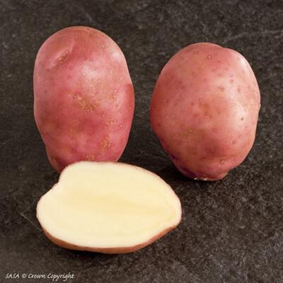 Organic Seed Potato Sunset (1kg)
