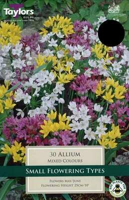 Allium Mixed x30