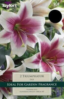 Lily Triumphator x2