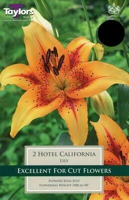 Lily Hotel California x2
