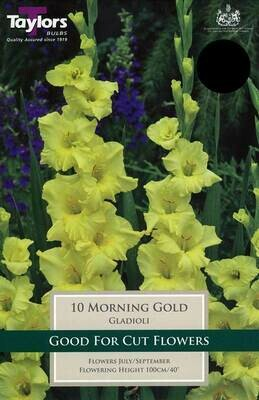 Gladioli Morning Gold x10