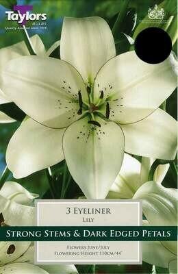 Lily Eyeliner x3
