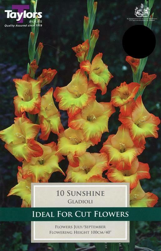 Gladioli Sunshine x10