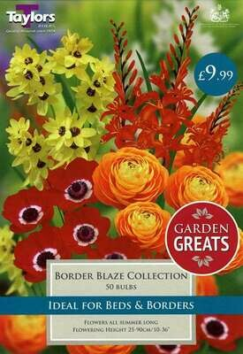 Border Blaze Collection x50