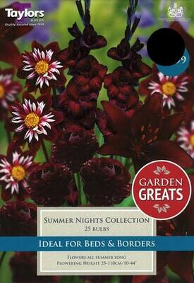 Summer Nights Collection x25
