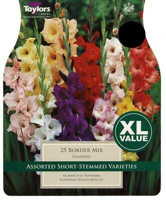 Gladioli Border Mixed x25