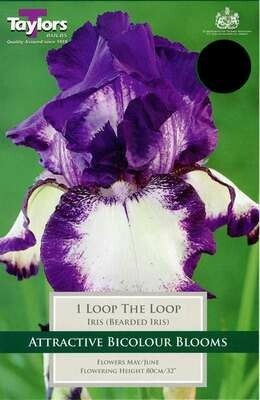 Iris Loop The Loop x1