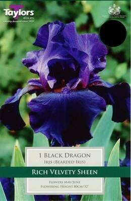Iris Black Dragon x1