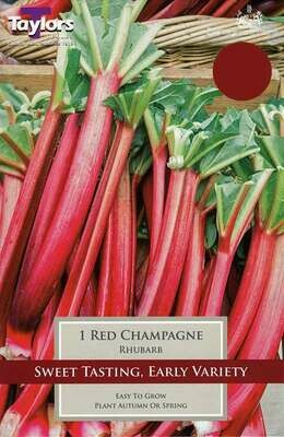 Rhubarb Red Champagne x1