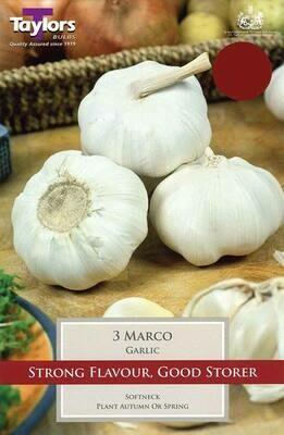 Garlic Marco x3