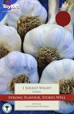 Garlic Solent Wight x1