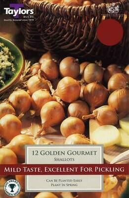 Shallots Golden Gourmet x12