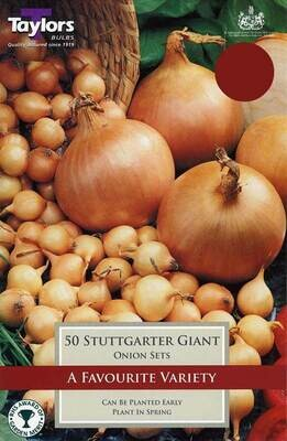 Onion Stuttgarter Giant x50