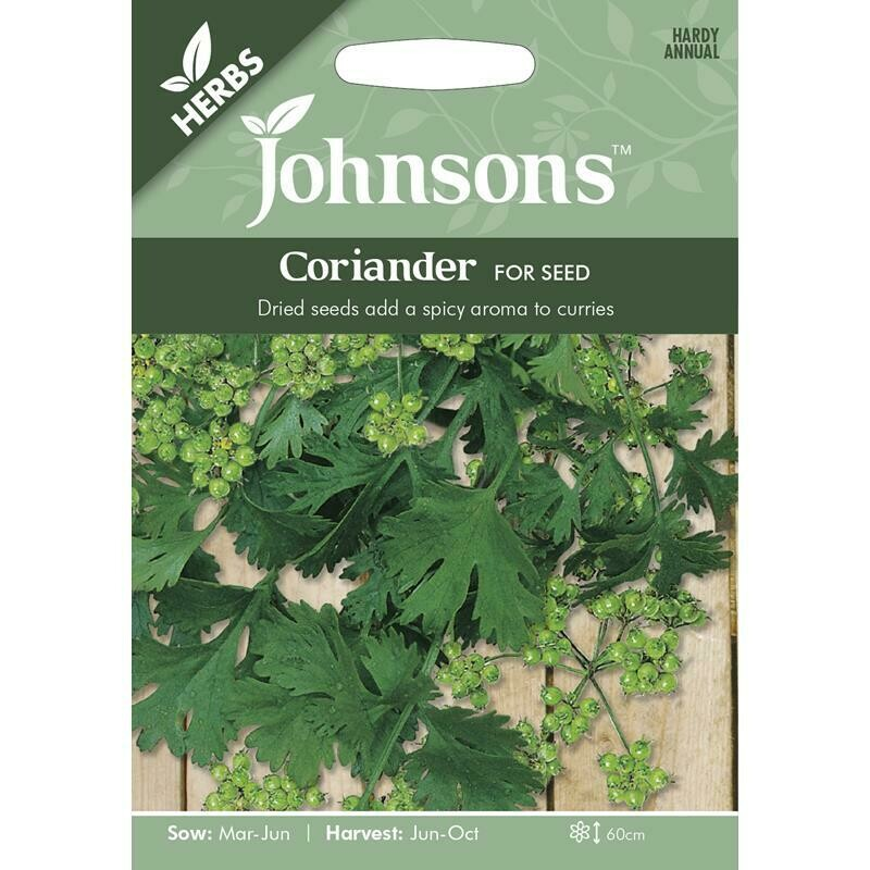 Herb - Coriander For Seed