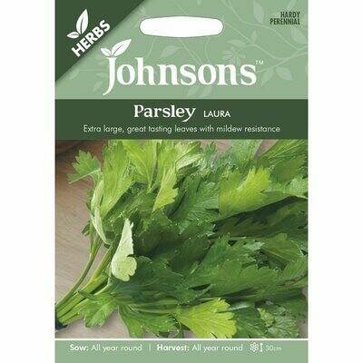 Herb - Parsley Laura