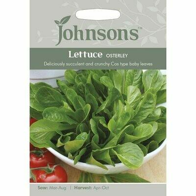 Lettuce Osterley
