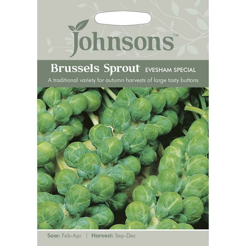 Brussels Sprout Evesham Special