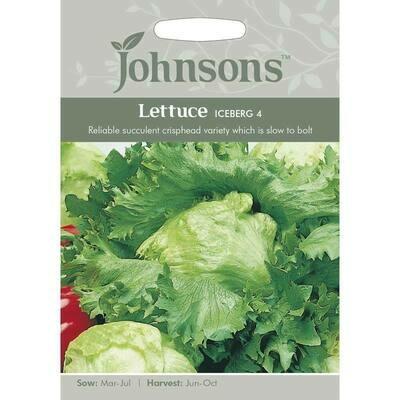 Lettuce Iceberg 4