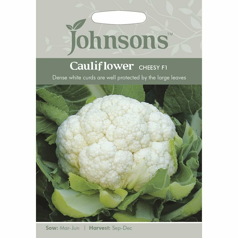 Cauliflower Cheesy F1