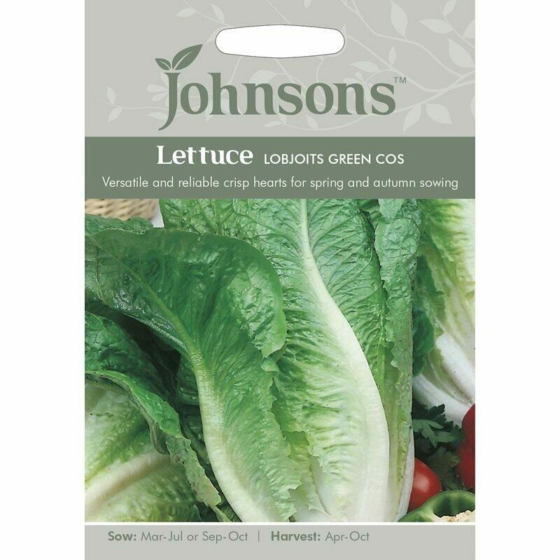 Lettuce Lobjoits Green Cos